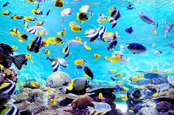 COEX &COEX Aquarium