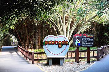梧桐島散策路