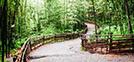 Un refrescante paseo por los bosques de bambú de Damyang