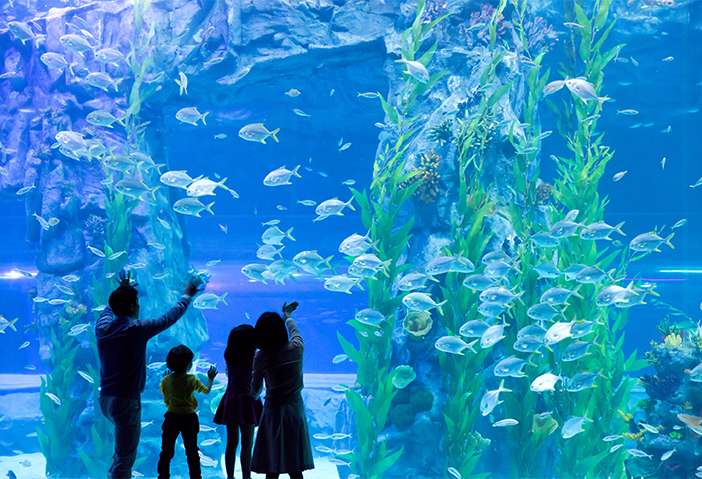Lotte World Aquarium (Credit: Lotte World)