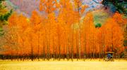 Herbstfestivals 2014 (September bis November)