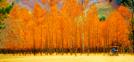 Festivales de otoño (septiembre~noviembre)
