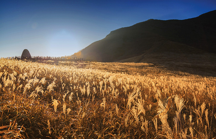 The highlands of the Yeongnam Alps have the biggest silver grass fields in the country.