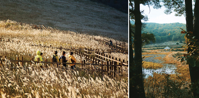 Hikers walk through the silver grass of Mt. Sinbulsan (left) / Field near Tongdosa Temple (right)