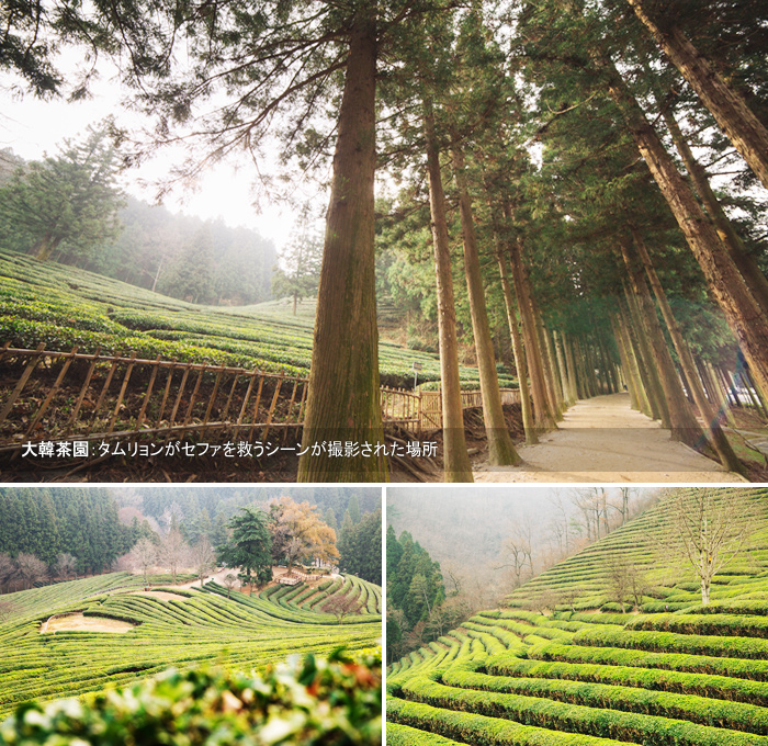 大韓茶園:タムリョンがセファを救うシーンが撮影された場所