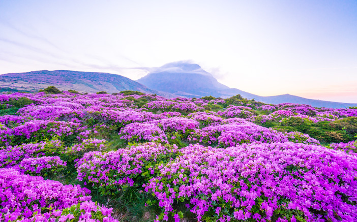 Recharge Your Soul With Healing In Jeju Official Korea Tourism Organization