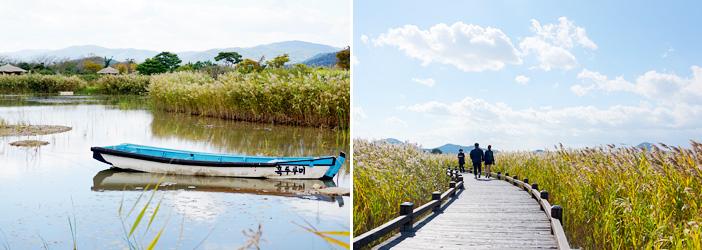 Заросли мискантуса водно-болотных угодий залива Сунчхонман