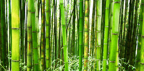 Set off on an Eco Vacation to Damyang's Bamboo Forest, Juknokwon