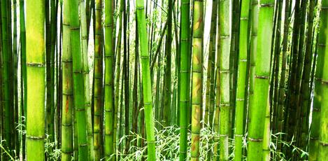 去往竹林的环保之旅,潭阳竹绿苑