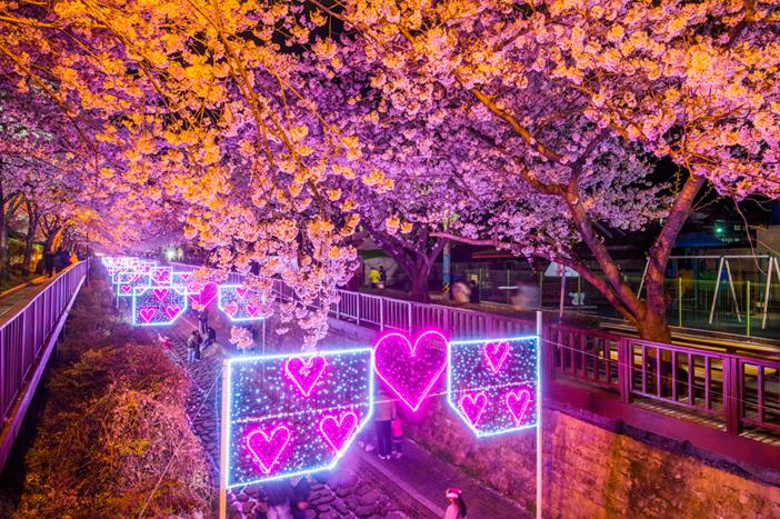 Yeojwacheon Stream's cherry blossom road