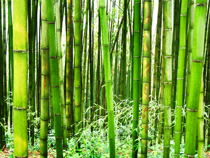 Unas vacaciones cerca de la naturaleza en el Jardín del Bambú Juknokwon