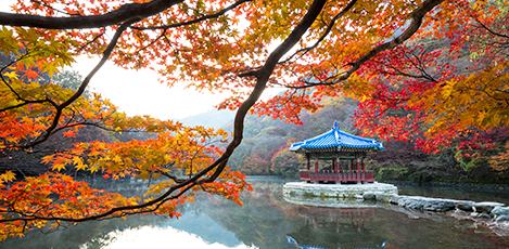 Korea's BEST 5 Fall Foliage Sites
