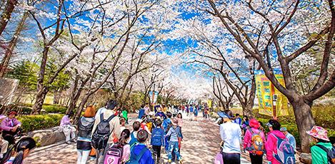 春を探しに出かけよう!ソウルの花の名所8選