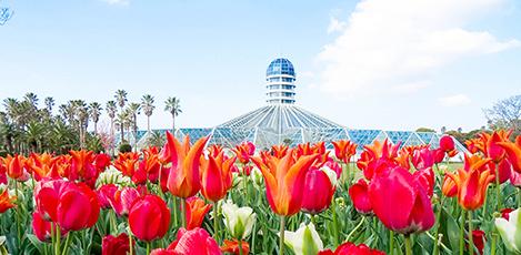 四季如春的温室植物园