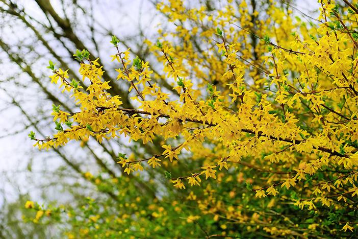 Parc Haneul, fleurs 'gaenari'