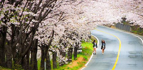 春の花が楽しめるおすすめスポット