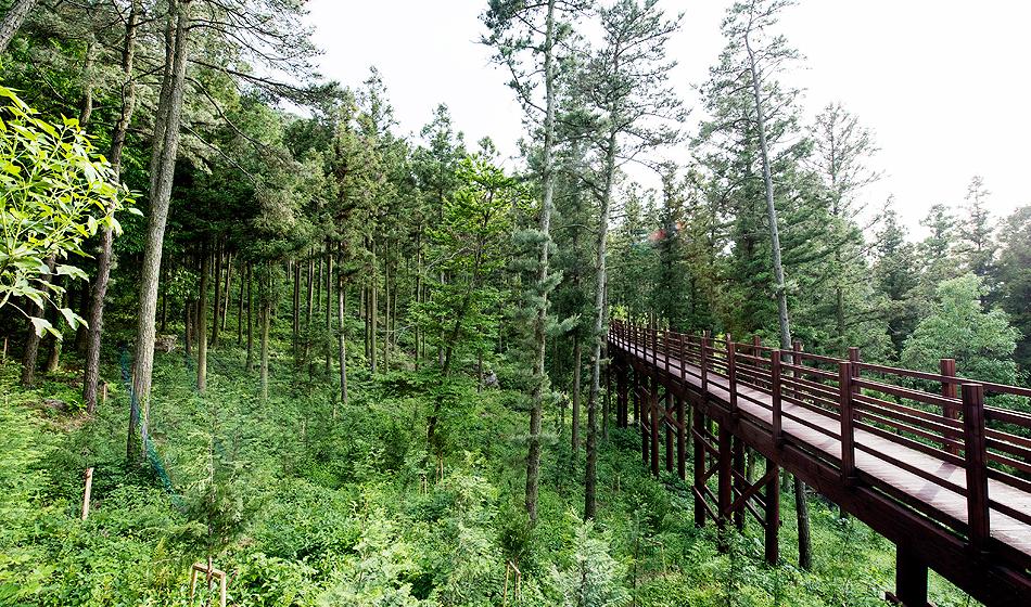 편백나무 숲 전경