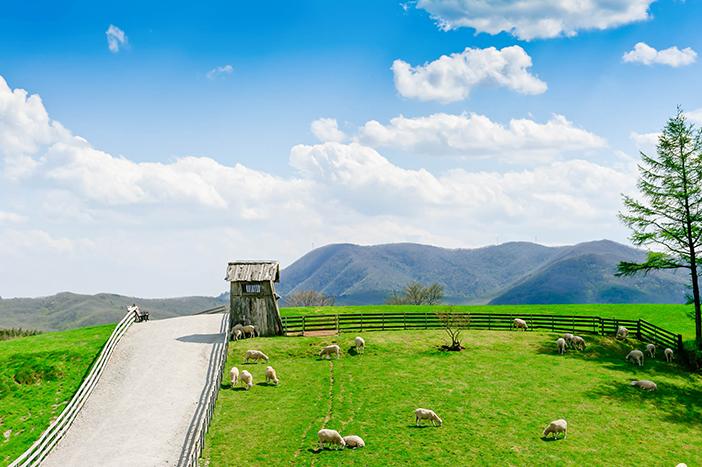 Ferme d'élevage des troupeaux de moutons à Daegwallyeong