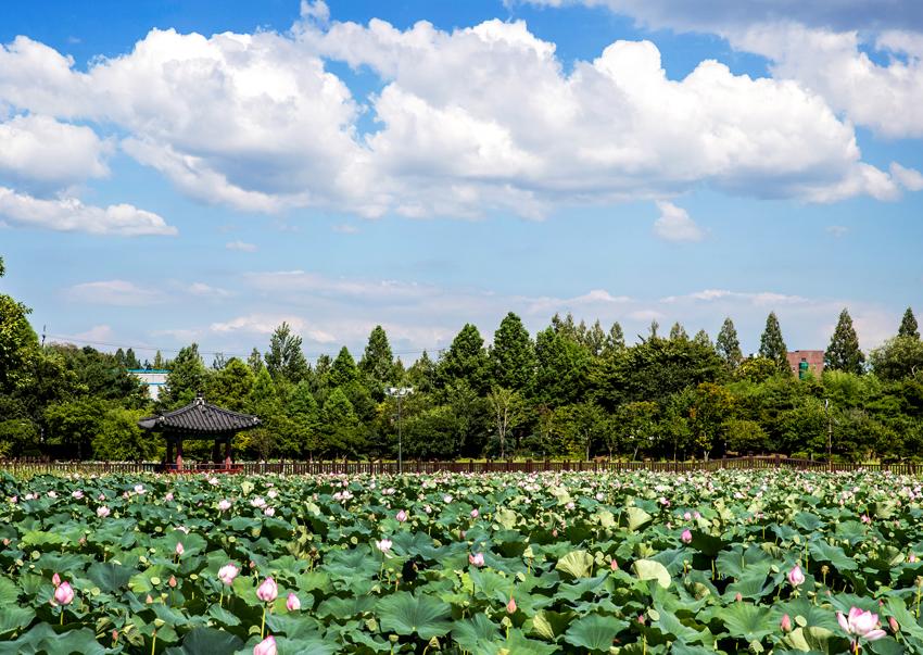 Parque Deokjin