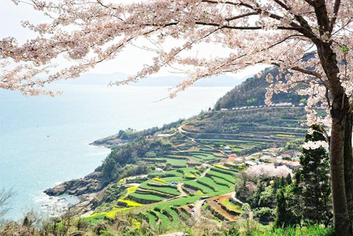 タレンイ村(写真上)、棚田(下左)、しょいこ道(下右)(写真提供:南海未来新聞)