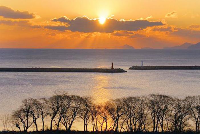 夕暮れの防潮魚付林(写真上)、防潮魚付林の風景(下)(上の写真提供:南海郡、下:南海未来新聞)