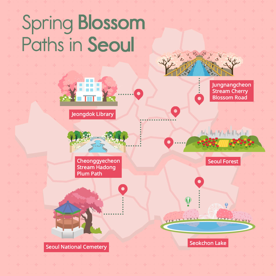 Spring Blossom Paths in Seoul