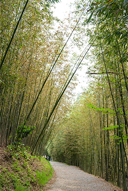 Wald Ahopsan