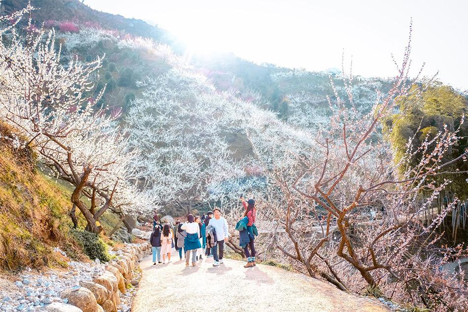 Gwangyang Maehwa Village (Credit: Travel-Stained)