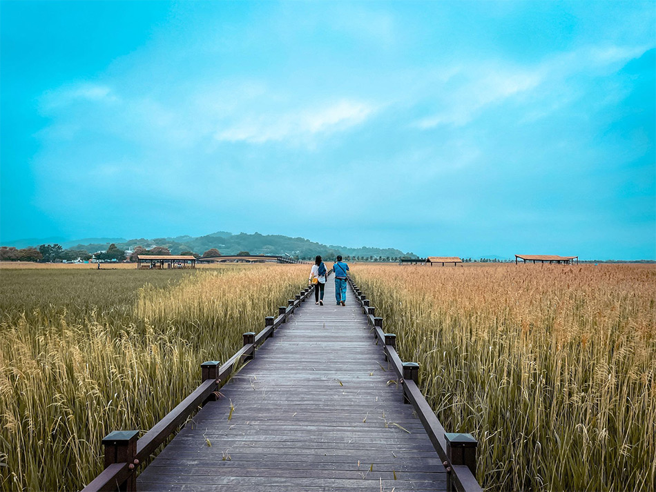 Suncheonman Bay Wetland Reserve (Credit: Travel-Stained)