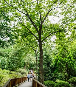 照片) 洪陵树木园