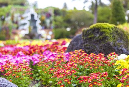 Jardín Botánico Byeokchoji (cortesía del Portal de Turismo de Gyeonggi-do)