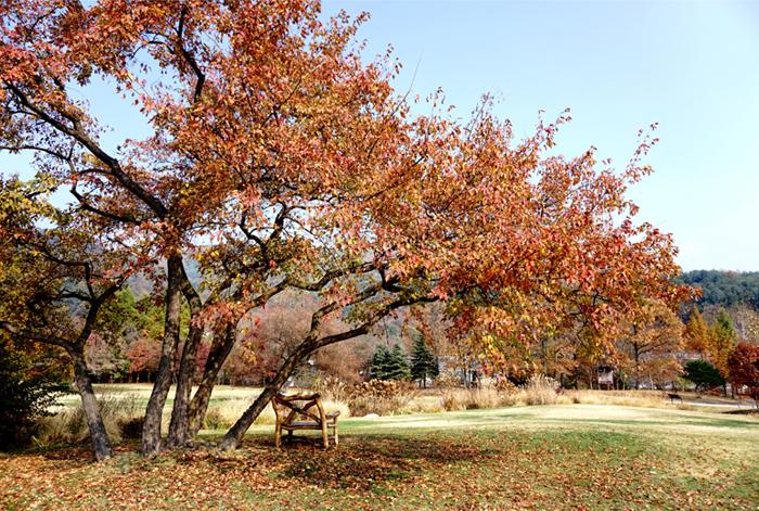 秋色蔓延的平康植物園草地庭園