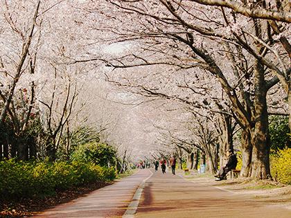 [Busan] Spring is Coming in Busan