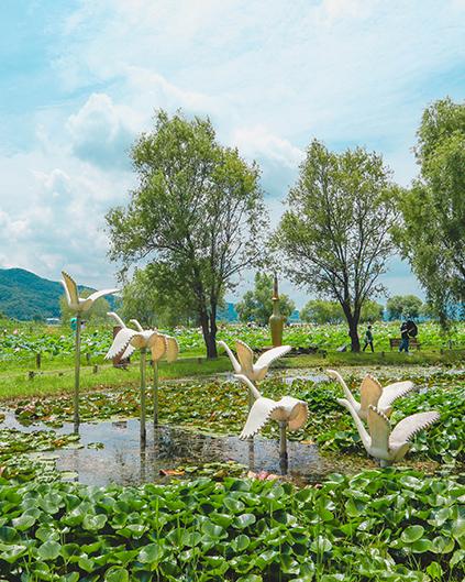 Lotus et fontaines autour de la zone culturelle des activités des fleurs de lotus, parc Semiwon