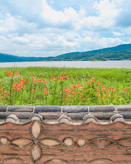 Fleurs de lis 'nari-kkot' et lotus autour du lac Dumulmeori