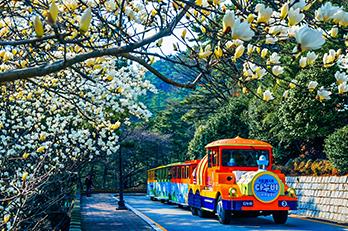 照片) 太宗台Danubi列车