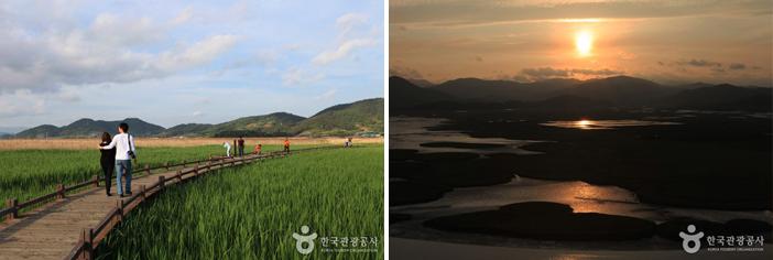 順天湾湿地(写真:韓国観光公社)