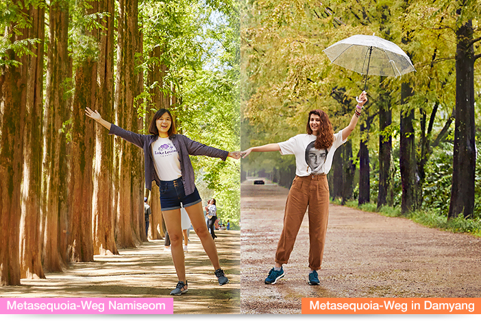 Metasequoia-Weg in Damyang (links), Metasequoia-Weg Namiseom (rechts)