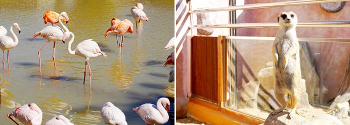 Aves acuáticas (izquierda) / Parque de Conservación de la Vida Silvestre (derecha).