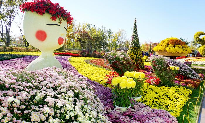 Exhibición de 10 millones de crisantemos en el Jardín Nacional de la Bahía de Suncheonman