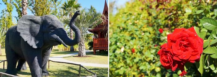 Jardín Tailandés (izquierda) / Rosas en el Jardín Turco (derecha).