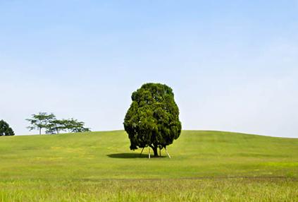 Parque Olímpico (Foto del árbol es cortesía de K Spo&Co)