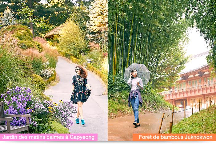 (à gauche) Jardin des matins calmes à Gapyeong, (à droite) Forêt de bambous Juknokwon