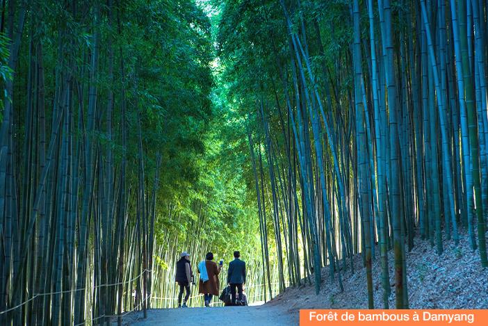 (en haut) Forêt de bambous à Damyang, (en bas) jardin des matins calmes à Gapyeong