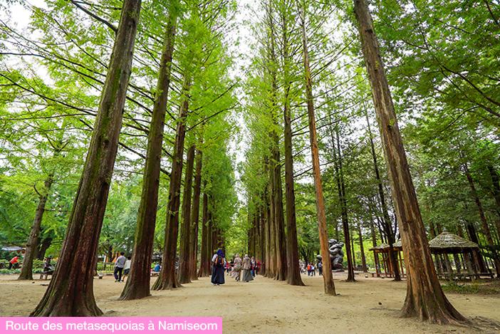 (en haut) Route des metasequoias à Namiseom, (en bas), route des metasequoias à Damyang