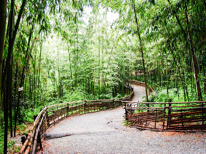Refresh Yourself In The Bamboo Forest Of Damyang
