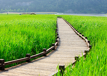 【 Photo: Suncheonman Bay Wetland Reserve 】