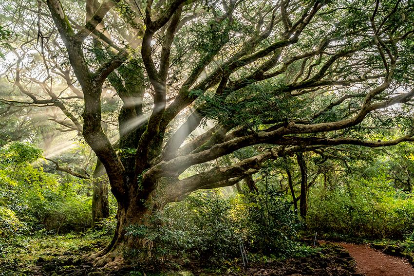 Sendero del bosque Bijarim