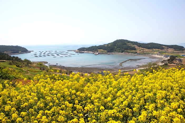 Insel Cheongsando