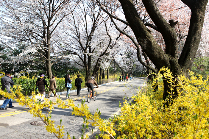 Walking path in Namsan Park